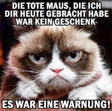 baba1268 - TT 17.05.2019 - Grumpy Cat ist tot :-(